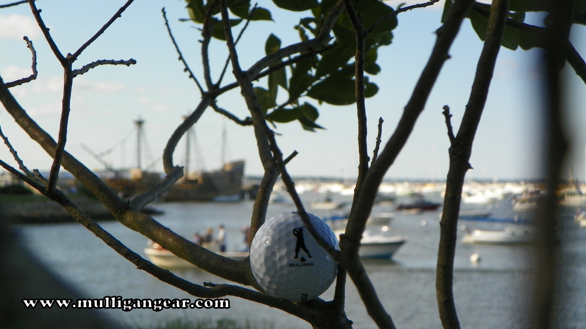Mulligan Ball in Tree